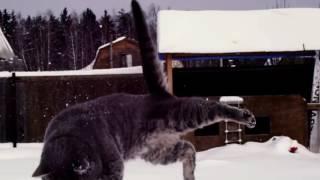 Редкие породы котов