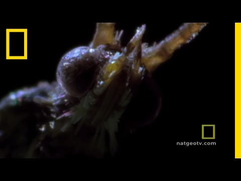 Deadly Mating | National Geographic