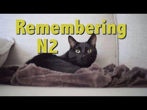 N2 the Talking Cat S4 Ep23 - Remembering N2