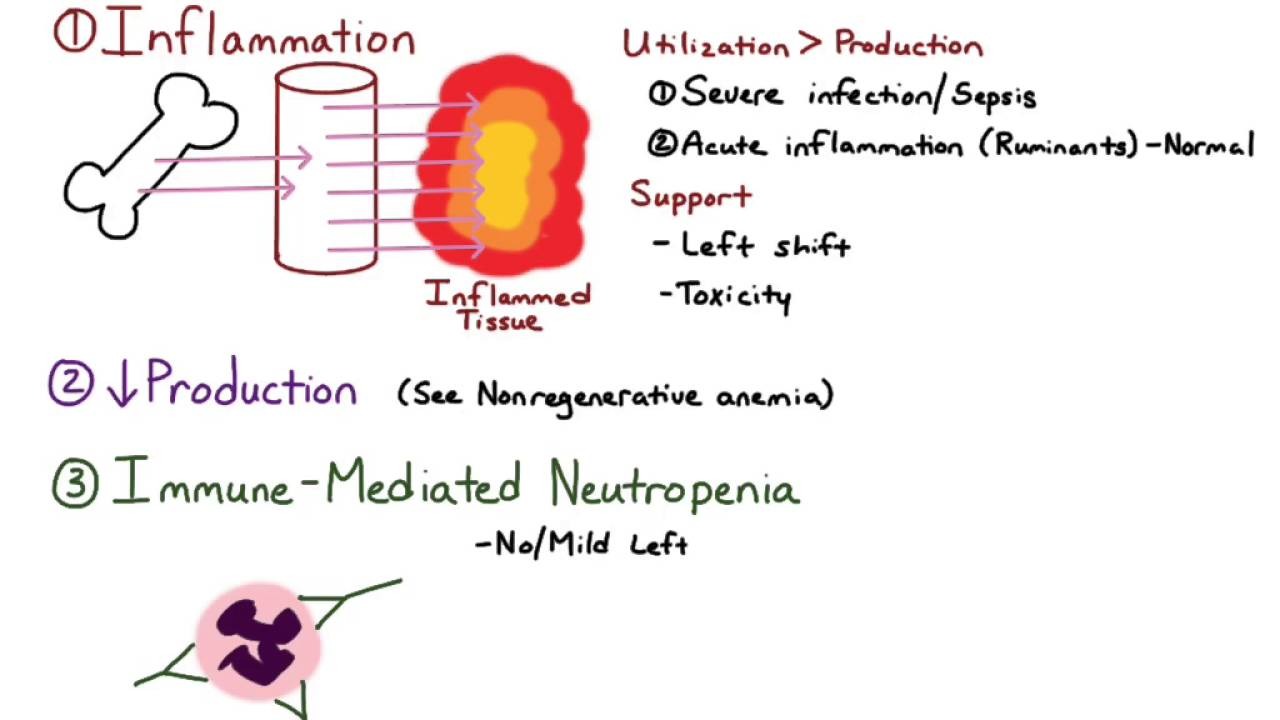 Communication on this topic: How to Live with Neutropenia, how-to-live-with-neutropenia/