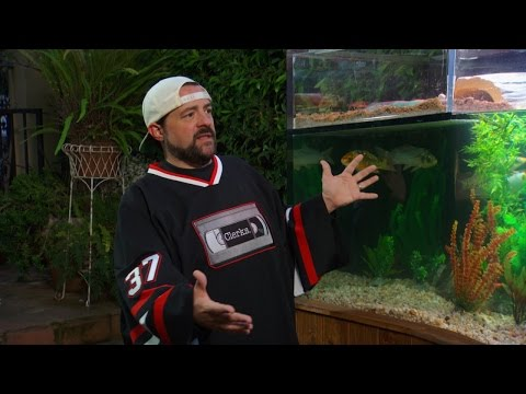 Kevin Smith Loves His Custom Aquarium Stocked With Turtles and Koi!