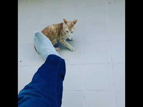 Kedi.replikleri