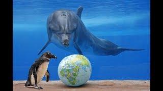 видео 8 июня отмечается Всемирный день океанов
