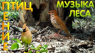 Птицы, Природа, Лес, Весна, Слушать пение птиц онлайн, Релакс, Медитация, Живая природа, Подснежники