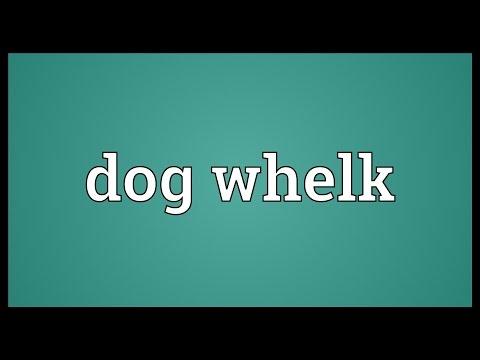 Dog whelk Meaning