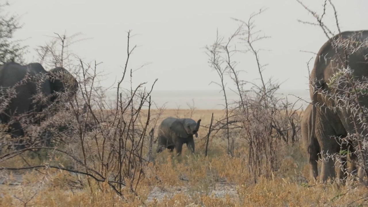 Elefantastisch
