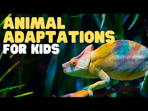 Animal Adaptations For Kids, Learn About Physical, Life Cycle, And Behavioral Adaptations Of Animals
