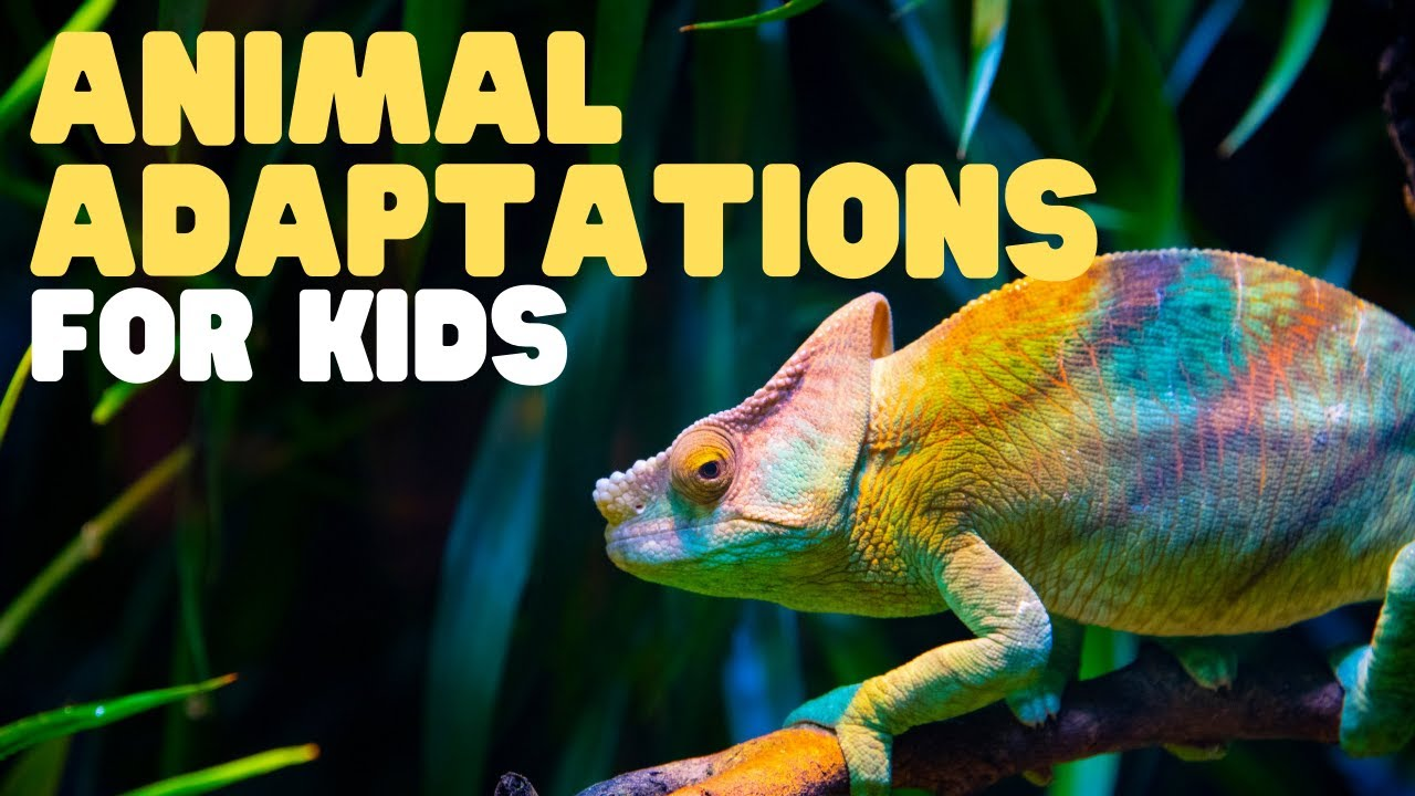 hight resolution of Animal Adaptations for Kids