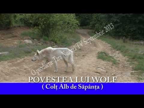 Povestea Lui Wolf - ( Colţ Alb De Săpânţa )
