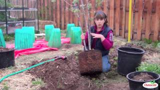 How To Plant A Tree From A Container