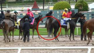 Exaggerator vs  Nyquist: strongest finisher?