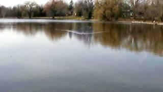 Muskrat at Villa Grove Park Mequon