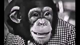 Jerry Lewis with Phil Foster and CHIMPS! 1963 gold