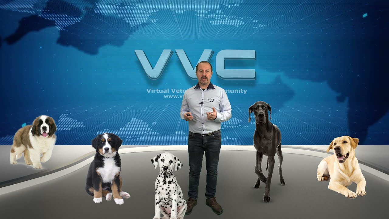 Ортопедични заболявания при подрастващи кучета от едри и гигантски породи!