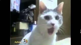 Говорящие коты и кошки   смотрите лучшие приколы про котов Смешные приколы с кошками1