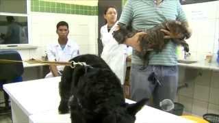 Veterinário mostra etapas de inseminação em cadela