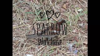 Sparrow watching - Coming soon world sparrow day