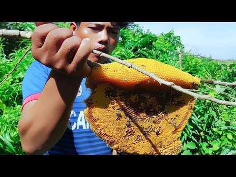 Awesome!  Boy harvesting bee near my Village in Battambang Province-How to harvest honey bee in Camb