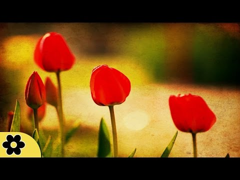 Meditation, Zen Music, Relaxation Music, Chakra, Relaxing Music for Stress Relief, Relax, ✿3149C