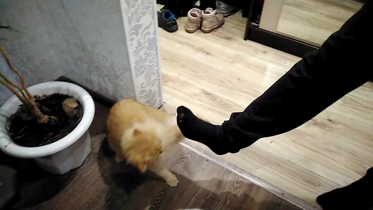 Кошка. Тренировочный боксёрский бой.