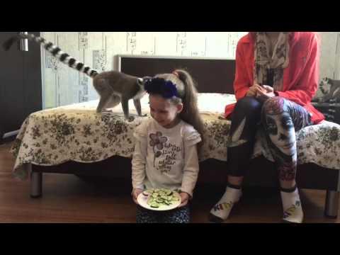Необыкновенный лемур - video-