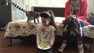 Смешное видео про лемуров.