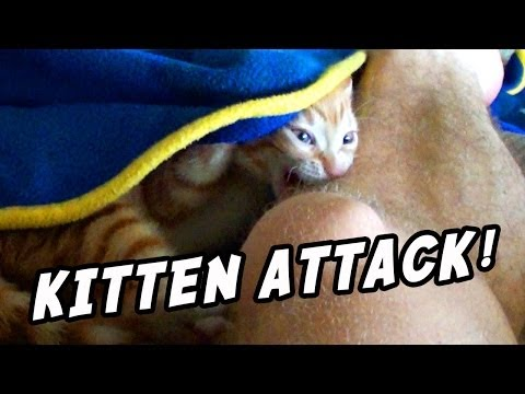 When Kittens Attack!