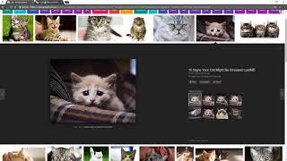 جوجل تحذف زر (مشاهدة الصورة) من نتائج البحث : هذه طريقه اعادته من جديد - سوالف سوفت