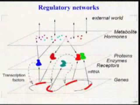 Statistical Modelling of Biological Networks
