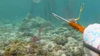 Gambar cover Spearfishing bahamas, John Dornellas, Darvil McBride, Michael Dornellas, pole spearing mahi mahi