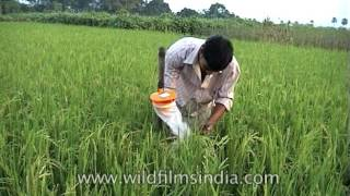 Bio village with organic agriculture in West Bengal, India