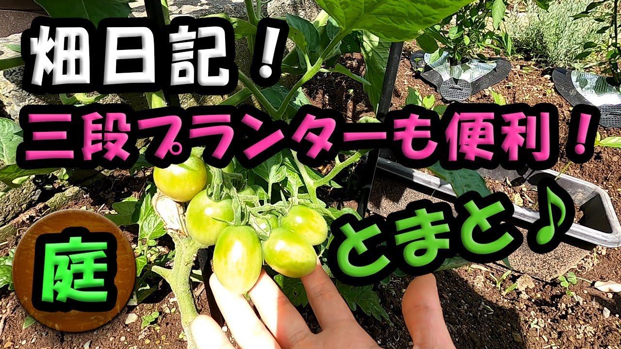 庭日記 6月23日! 「野菜がすくすく育ってます!」