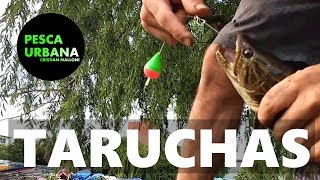 Pesca de Mojarras, Doradito, dientudito y taruchas en arroyo, PESCA URBANA, Street Fishing