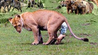 15 Crazy Ways Animals Give Birth