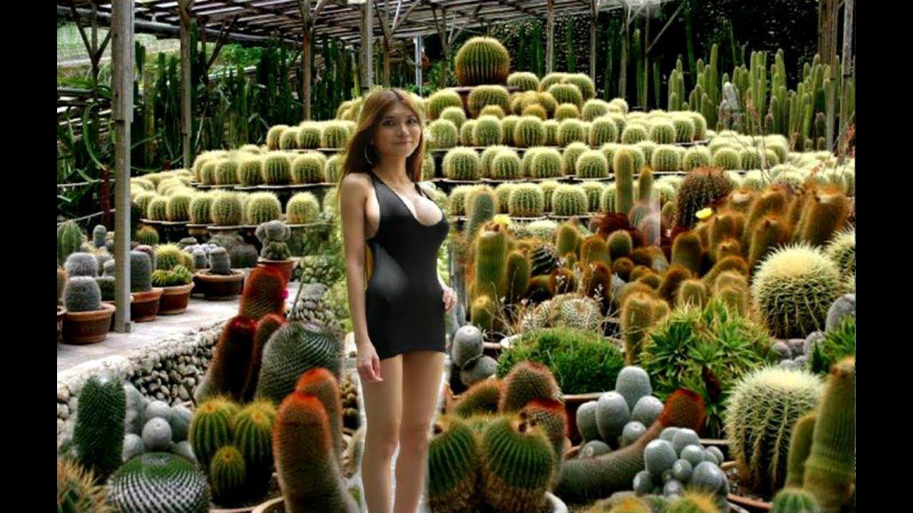 Cameron highland Cactus farm - YouTube