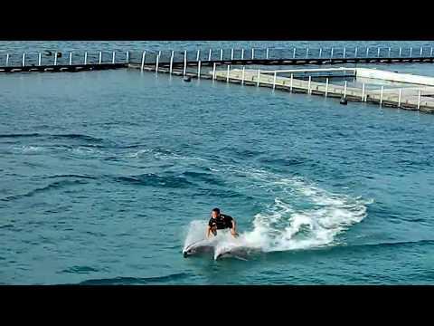 Dolphins in Ocean Adventure, Subic, Philippines
