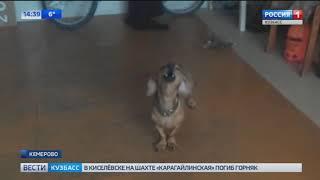 Видео: в Кемерове живет поющая собака