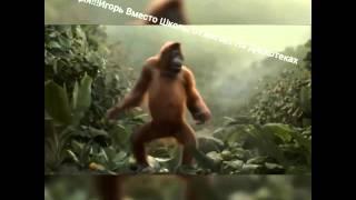 Обезьяна танцует под песню ай дигиди