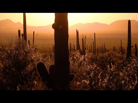 Saguaro National Park, Arizona, USA in 4K Ultra HD