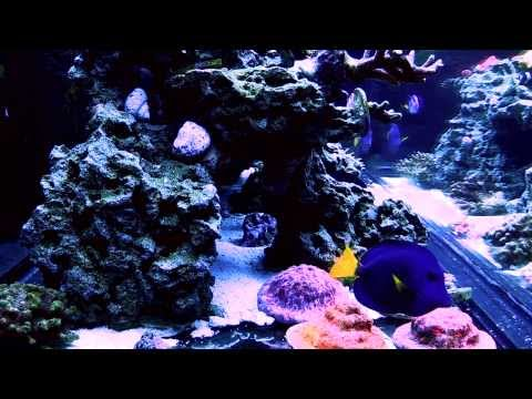 RELAX: Red Sea Max S-500 Saltwater Reef Tank w/ Gentle Rain Sounds