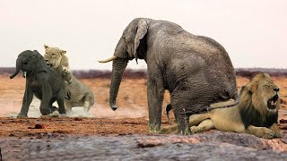 Wild Animals Videos - Elephant vs Lion vs Wild vs Crocodile vs Dogs vs Zebra vs Leopard