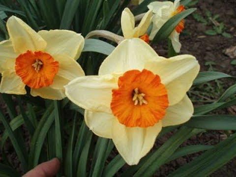 Весенние Цветы Картинки deephunter