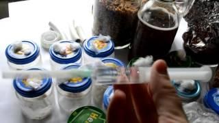 Мицелий Как делать мицелий  как делать грибницу, как выглядит грибница