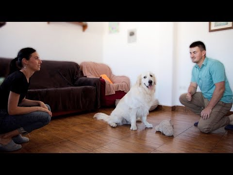 Who is Most Loved by our Funny Dog: Mommy or Daddy? [BEST REACTION EVER]