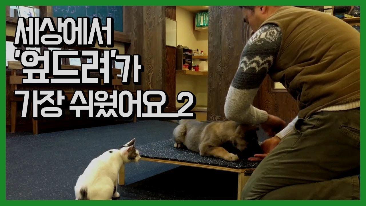 [반려견교육] 세상에서 '엎드려'가 가장 쉬웠어요_2 - puppy training 'down'