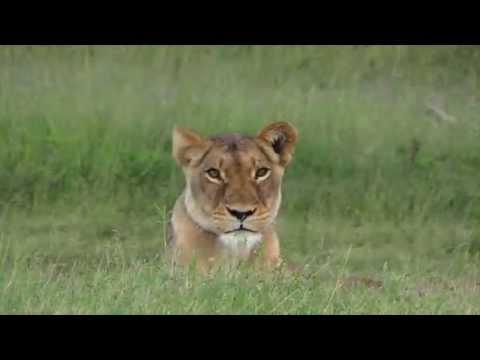 Sun Safaris Advert - Kruger