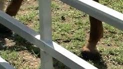 SOLD! Custom Home on 5 Acre Horse Property Near San Antonio!