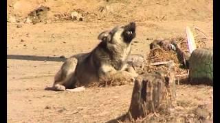 Бездомные собаки в Чите