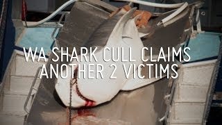WA Shark Cull Claims Another Two Victims