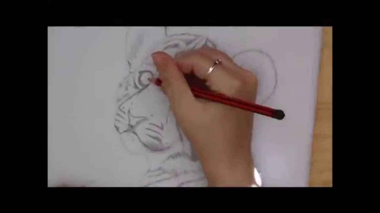 Line Drawing Of A Tiger S Face : Drawing a tiger cub dana wannet speeddrawing youtube
